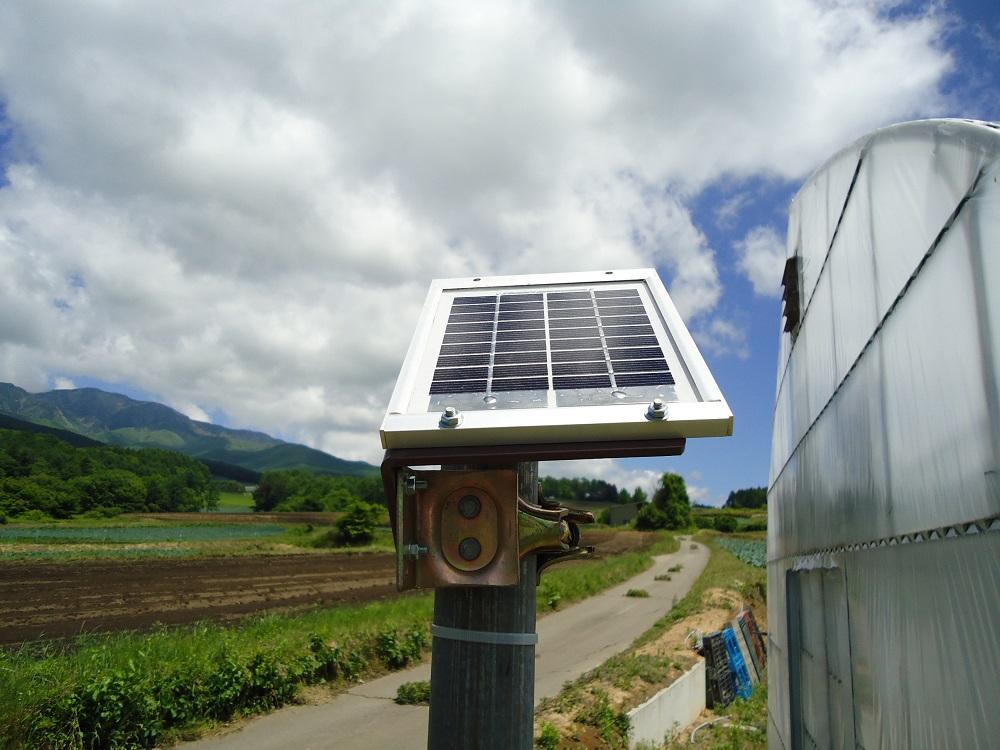 キャベツ     セルトレイ育苗  かん水を自動化